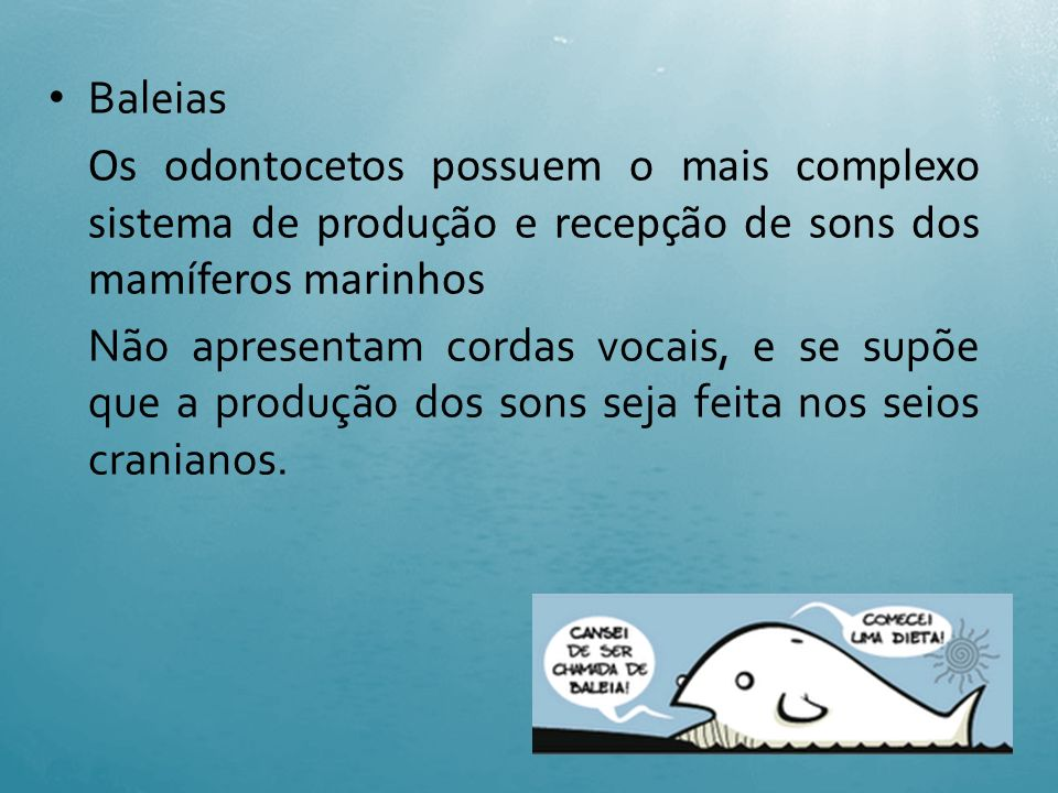 Baleias Os odontocetos possuem o mais complexo sistema de produção e recepção de sons dos mamíferos marinhos.