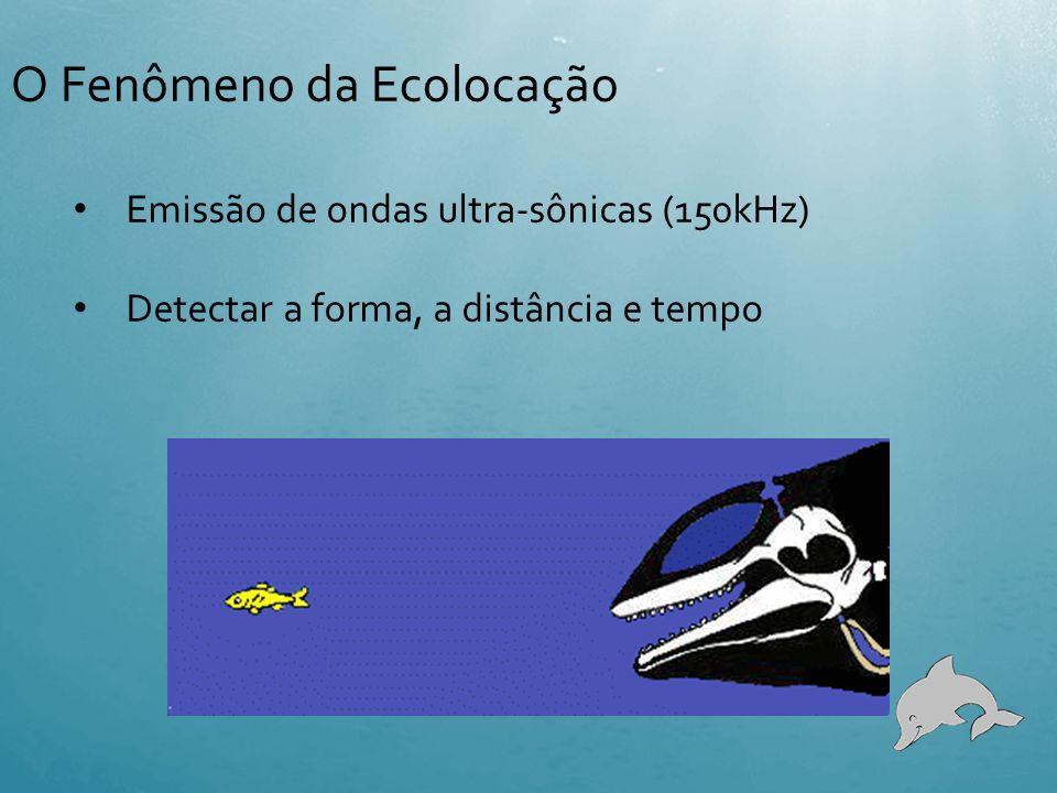 O Fenômeno da Ecolocação