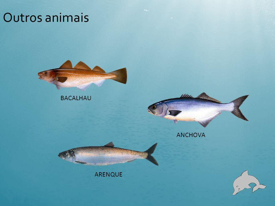 Outros animais BACALHAU ANCHOVA ARENQUE