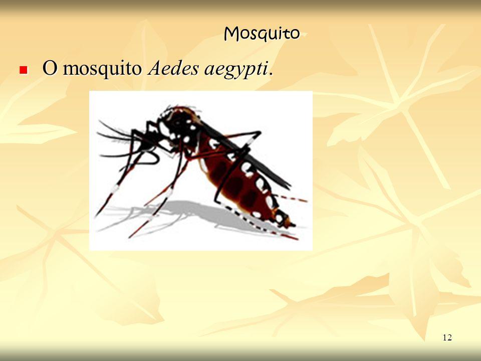 O mosquito Aedes aegypti.