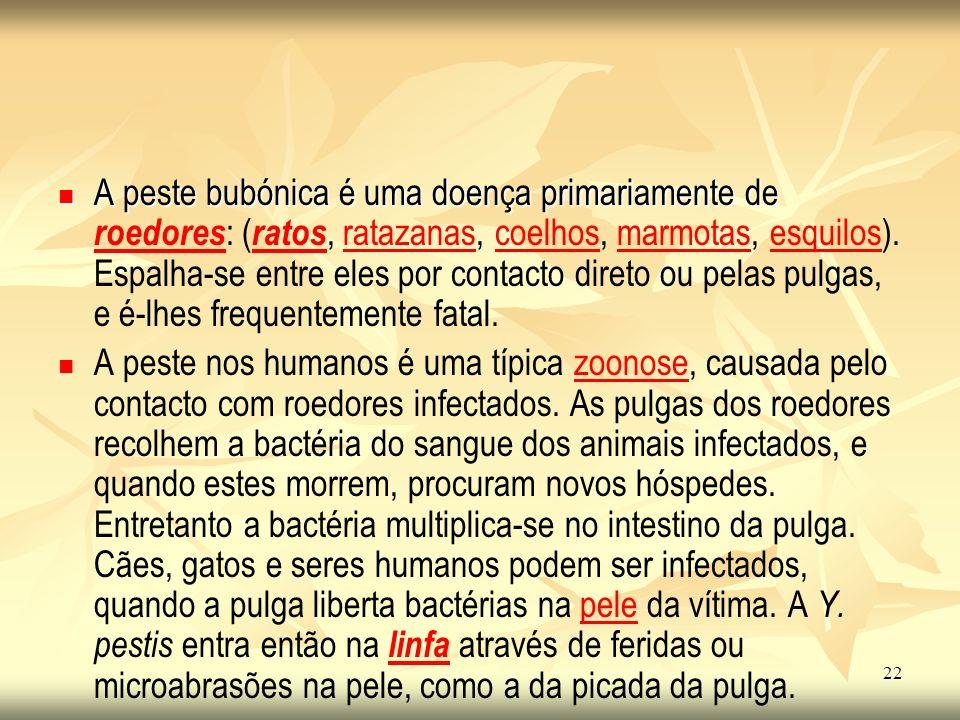 A peste bubónica é uma doença primariamente de roedores: (ratos, ratazanas, coelhos, marmotas, esquilos). Espalha-se entre eles por contacto direto ou pelas pulgas, e é-lhes frequentemente fatal.
