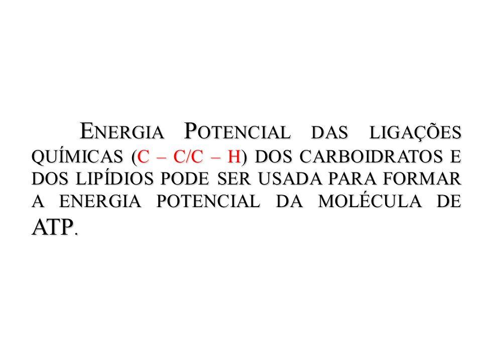 ENERGIA POTENCIAL DAS LIGAÇÕES QUÍMICAS (C – C/C – H) DOS CARBOIDRATOS E DOS LIPÍDIOS PODE SER USADA PARA FORMAR A ENERGIA POTENCIAL DA MOLÉCULA DE ATP.