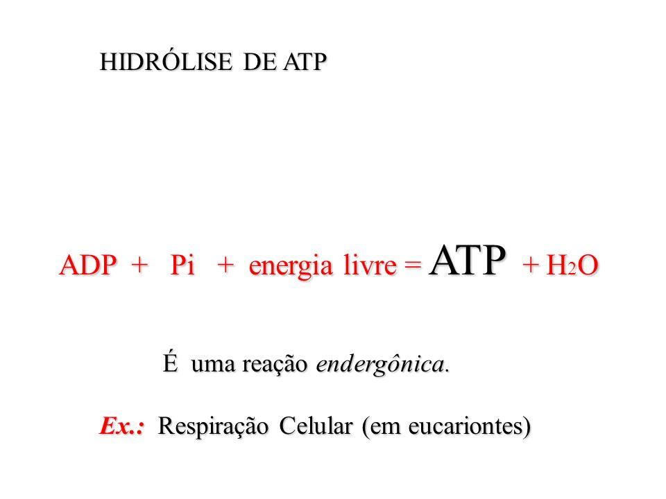 HIDRÓLISE DE ATP ADP + Pi + energia livre = ATP + H2O.