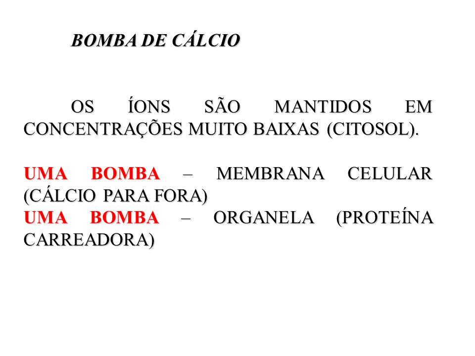 BOMBA DE CÁLCIOOS ÍONS SÃO MANTIDOS EM CONCENTRAÇÕES MUITO BAIXAS (CITOSOL). UMA BOMBA – MEMBRANA CELULAR (CÁLCIO PARA FORA)