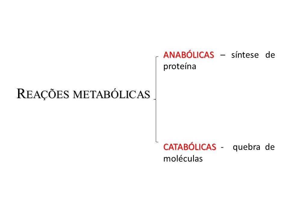 REAÇÕES METABÓLICAS ANABÓLICAS – síntese de proteína