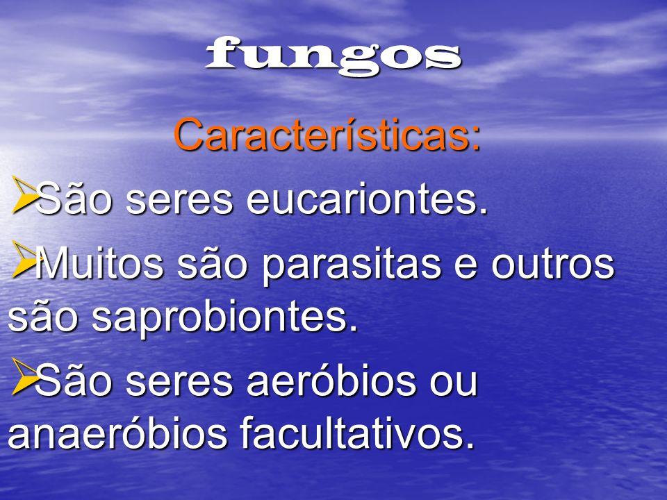 fungosCaracterísticas: São seres eucariontes. Muitos são parasitas e outros são saprobiontes. São seres aeróbios ou anaeróbios facultativos.