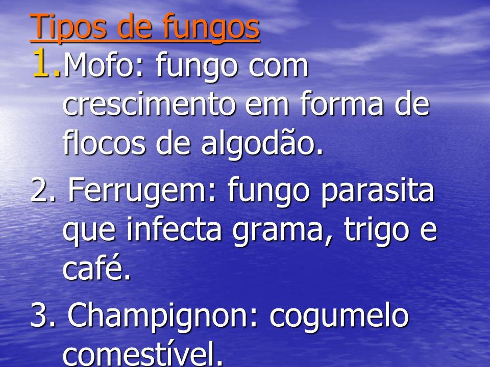 Tipos de fungosMofo: fungo com crescimento em forma de flocos de algodão. 2. Ferrugem: fungo parasita que infecta grama, trigo e café.