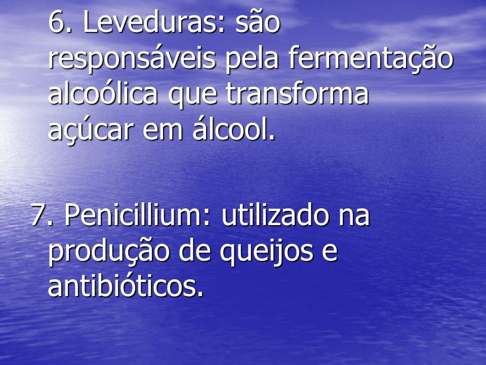 6. Leveduras: são responsáveis pela fermentação alcoólica que transforma açúcar em álcool.