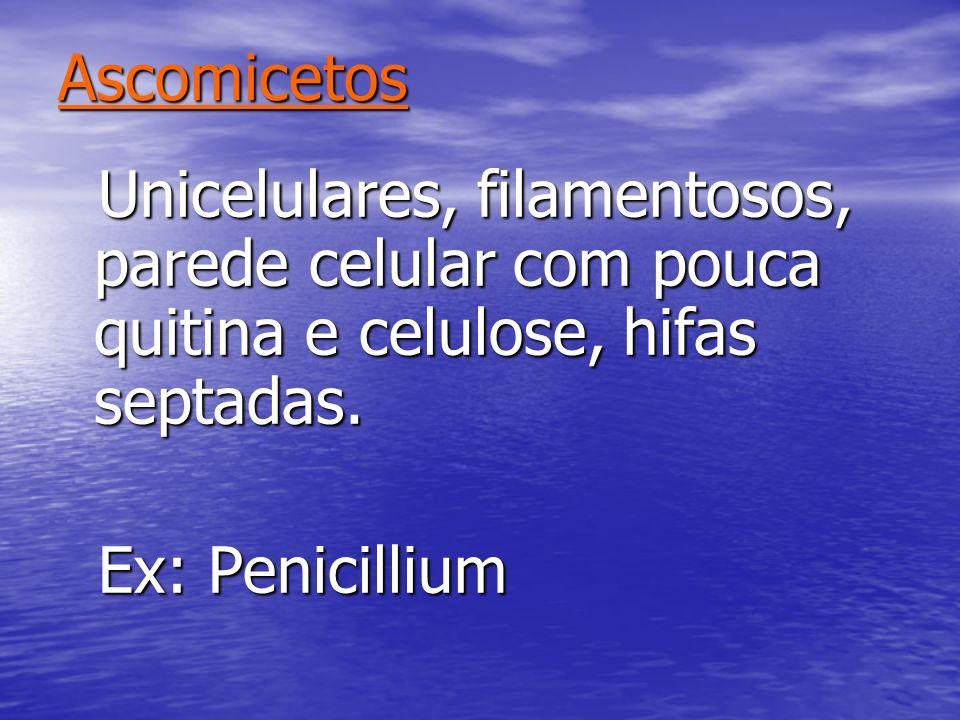 AscomicetosUnicelulares, filamentosos, parede celular com pouca quitina e celulose, hifas septadas.