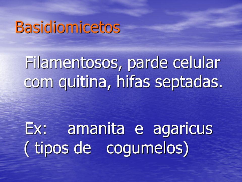 Ex: amanita e agaricus ( tipos de cogumelos)
