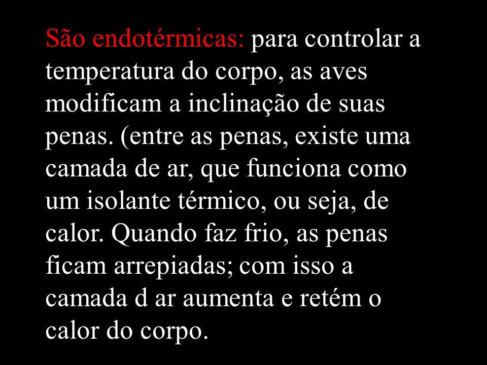 São endotérmicas: para controlar a temperatura do corpo, as aves modificam a inclinação de suas penas.