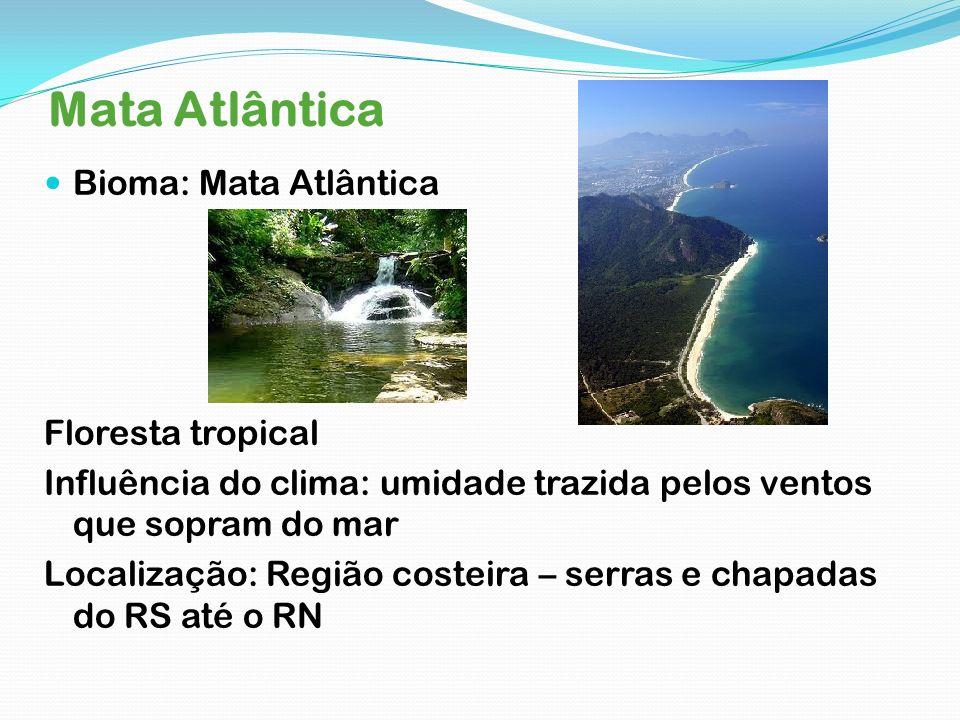 Mata Atlântica Bioma: Mata Atlântica Floresta tropical