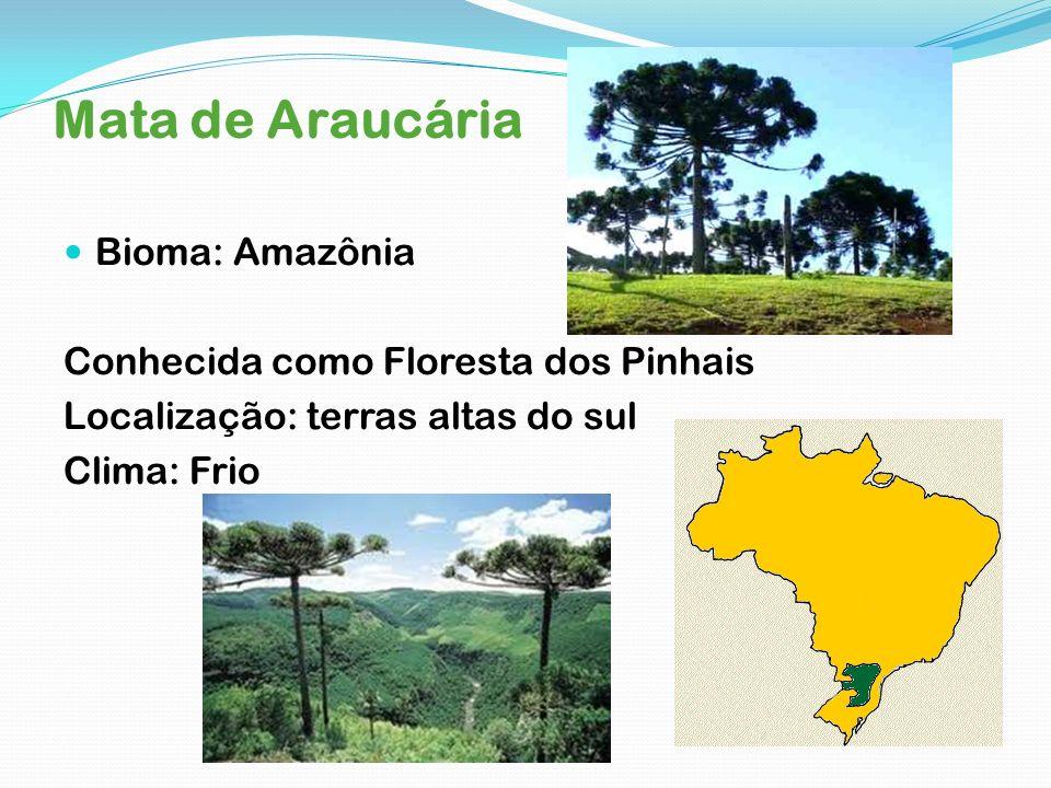 Mata de Araucária Bioma: Amazônia Conhecida como Floresta dos Pinhais