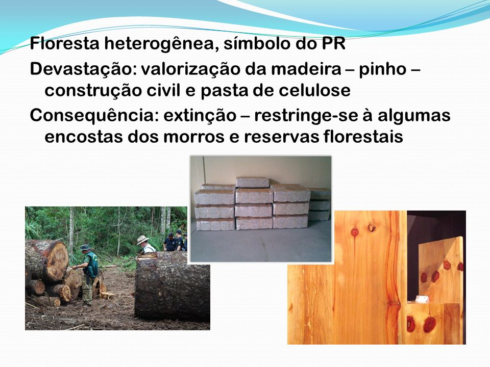 Floresta heterogênea, símbolo do PR
