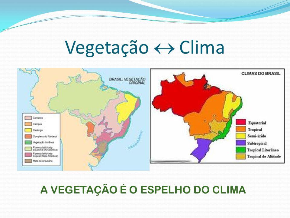 A VEGETAÇÃO É O ESPELHO DO CLIMA