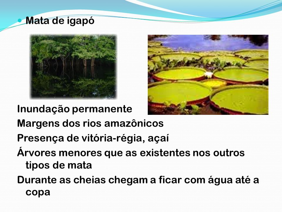 Mata de igapóInundação permanente. Margens dos rios amazônicos. Presença de vitória-régia, açaí.