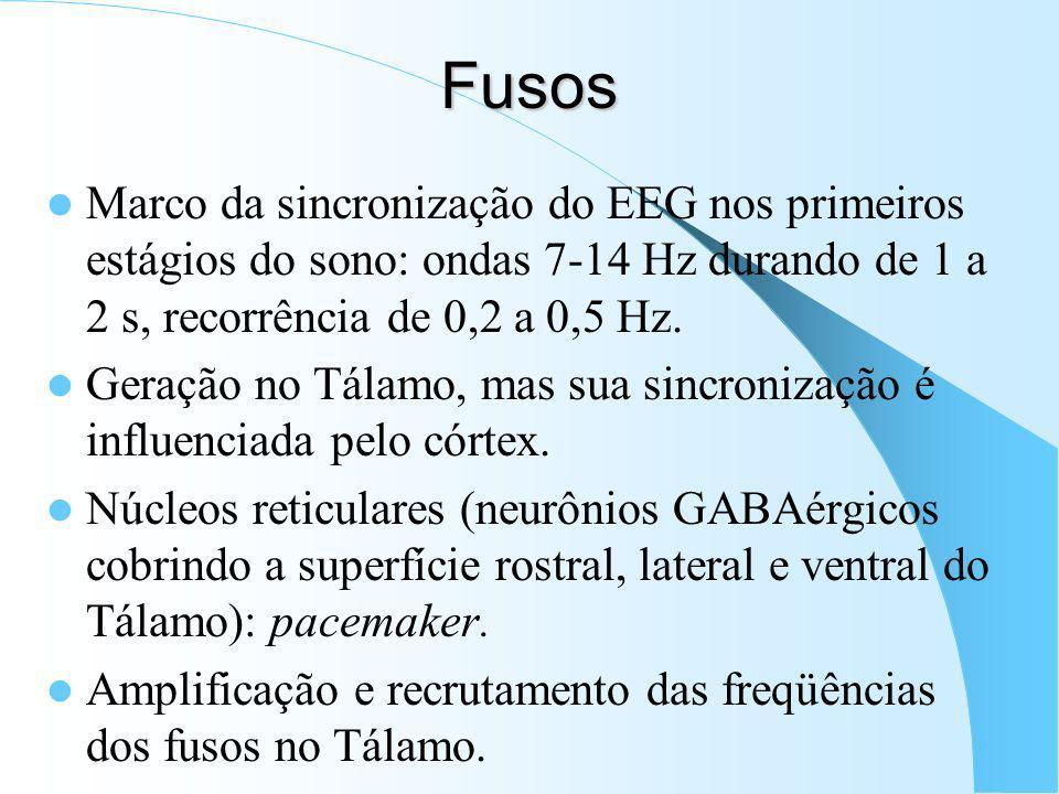 Fusos Marco da sincronização do EEG nos primeiros estágios do sono: ondas 7-14 Hz durando de 1 a 2 s, recorrência de 0,2 a 0,5 Hz.