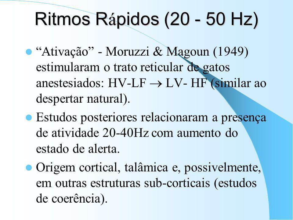 Ritmos Rápidos (20 - 50 Hz)