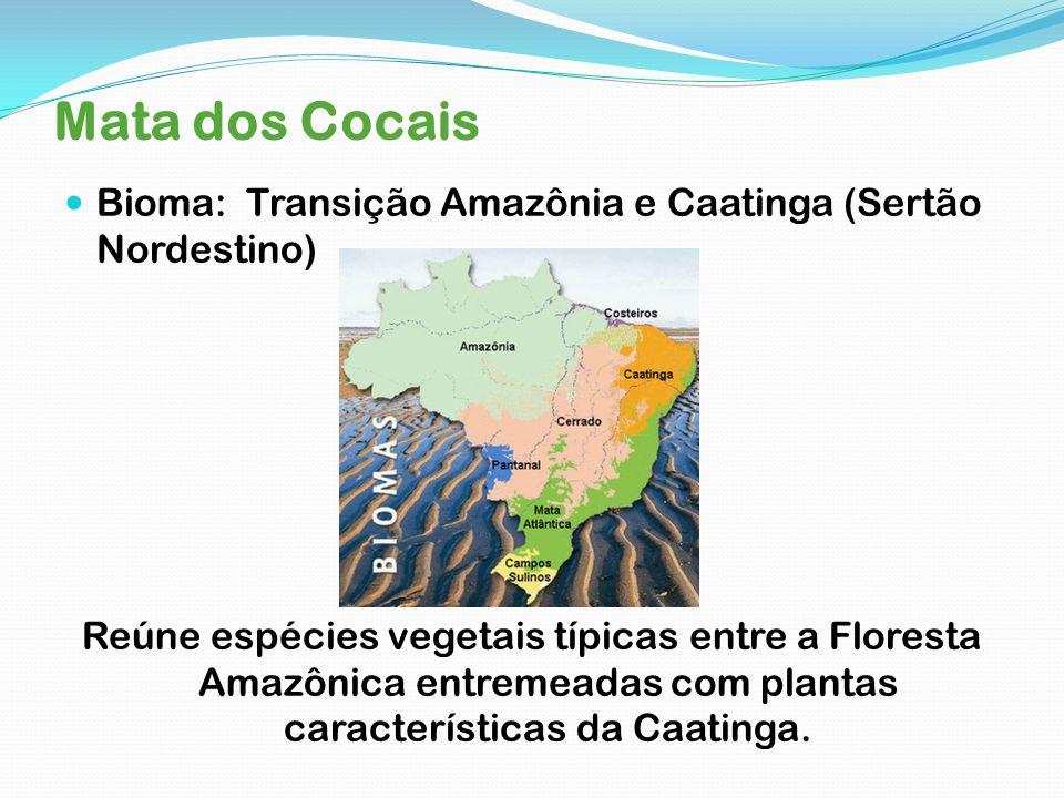 Mata dos Cocais Bioma: Transição Amazônia e Caatinga (Sertão Nordestino)