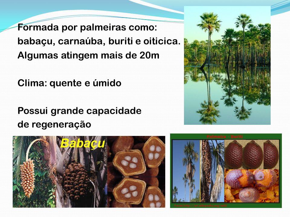 Formada por palmeiras como: babaçu, carnaúba, buriti e oiticica