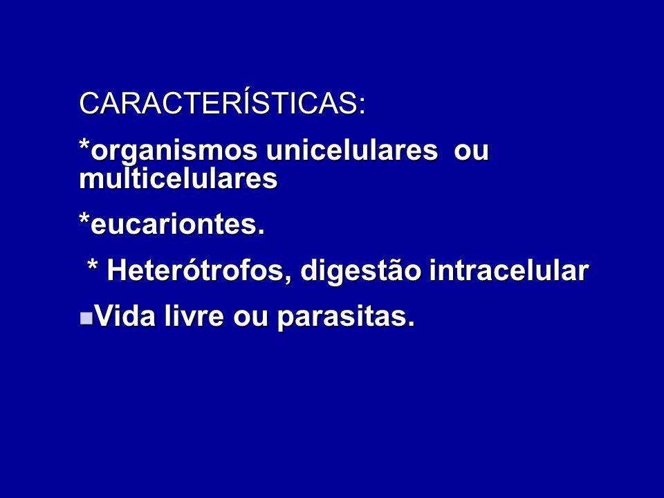 CARACTERÍSTICAS: *organismos unicelulares ou multicelulares. *eucariontes. * Heterótrofos, digestão intracelular.
