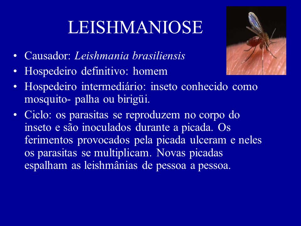 LEISHMANIOSE Causador: Leishmania brasiliensis