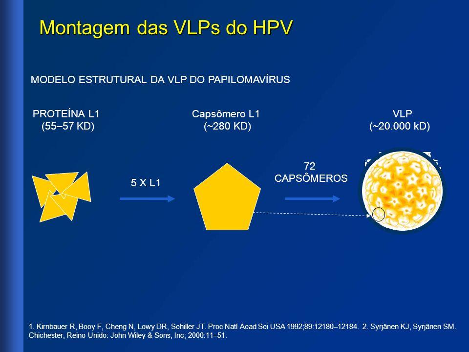Montagem das VLPs do HPV