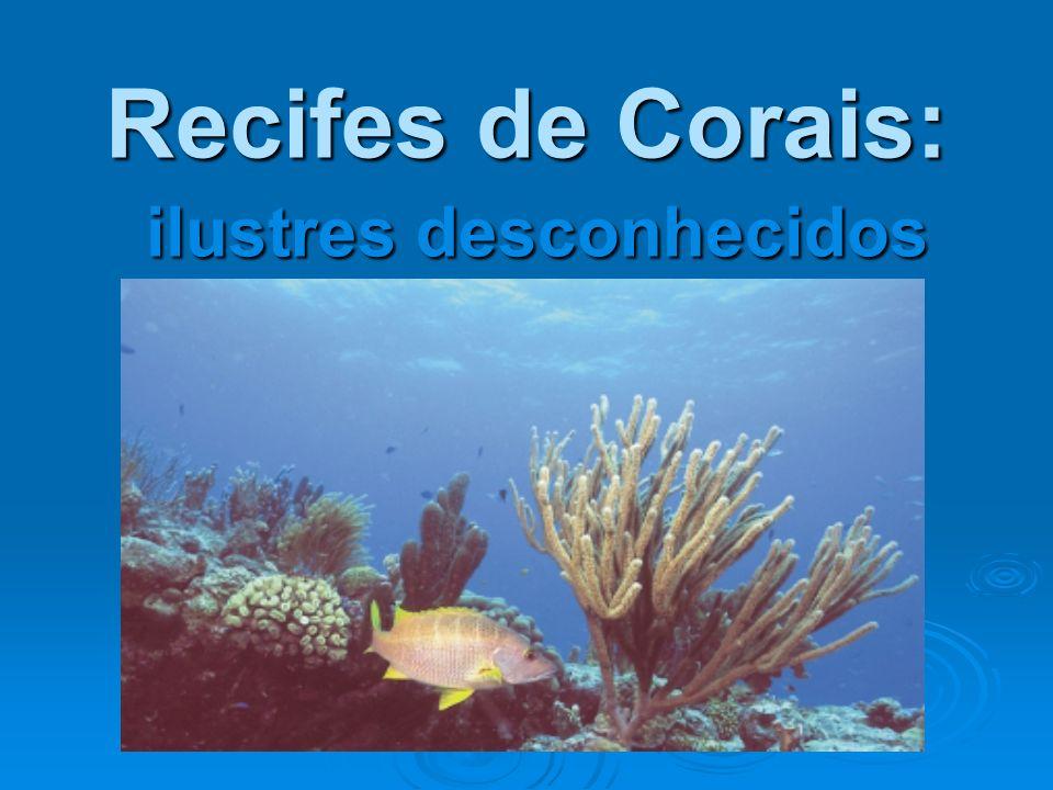 Recifes de Corais: ilustres desconhecidos