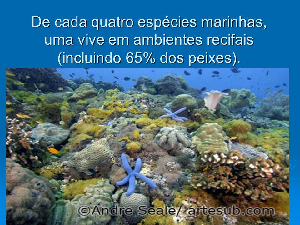 De cada quatro espécies marinhas, uma vive em ambientes recifais (incluindo 65% dos peixes).