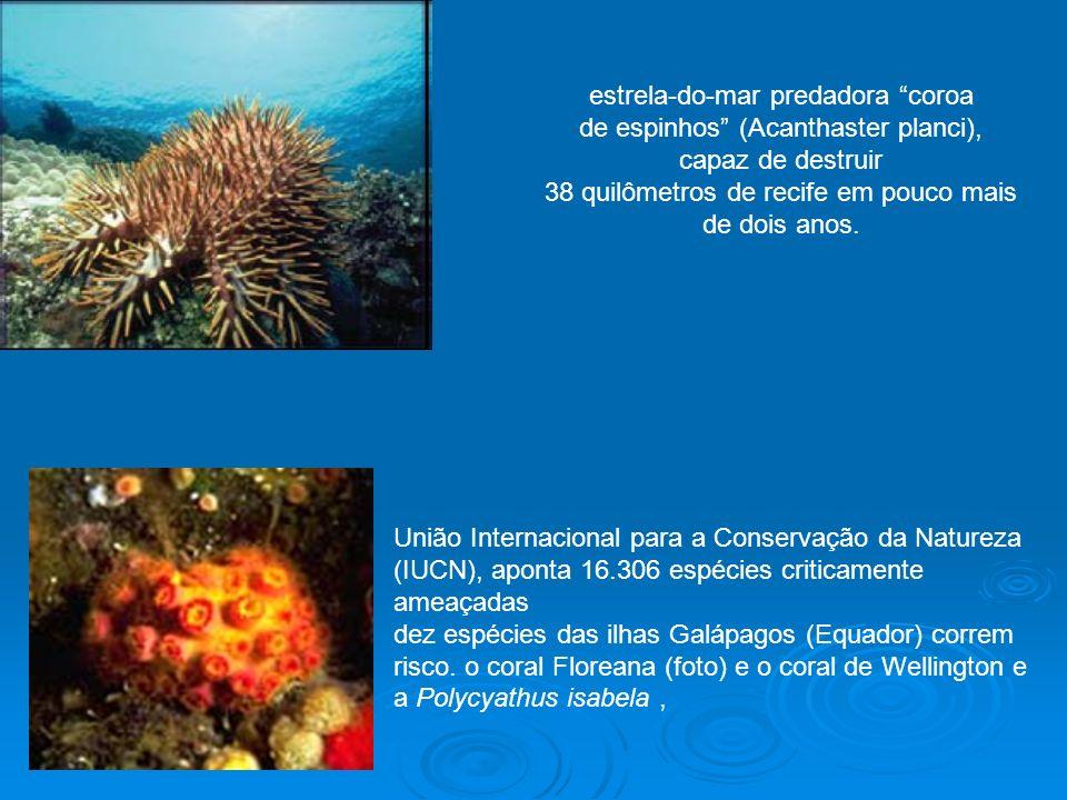 estrela-do-mar predadora coroa