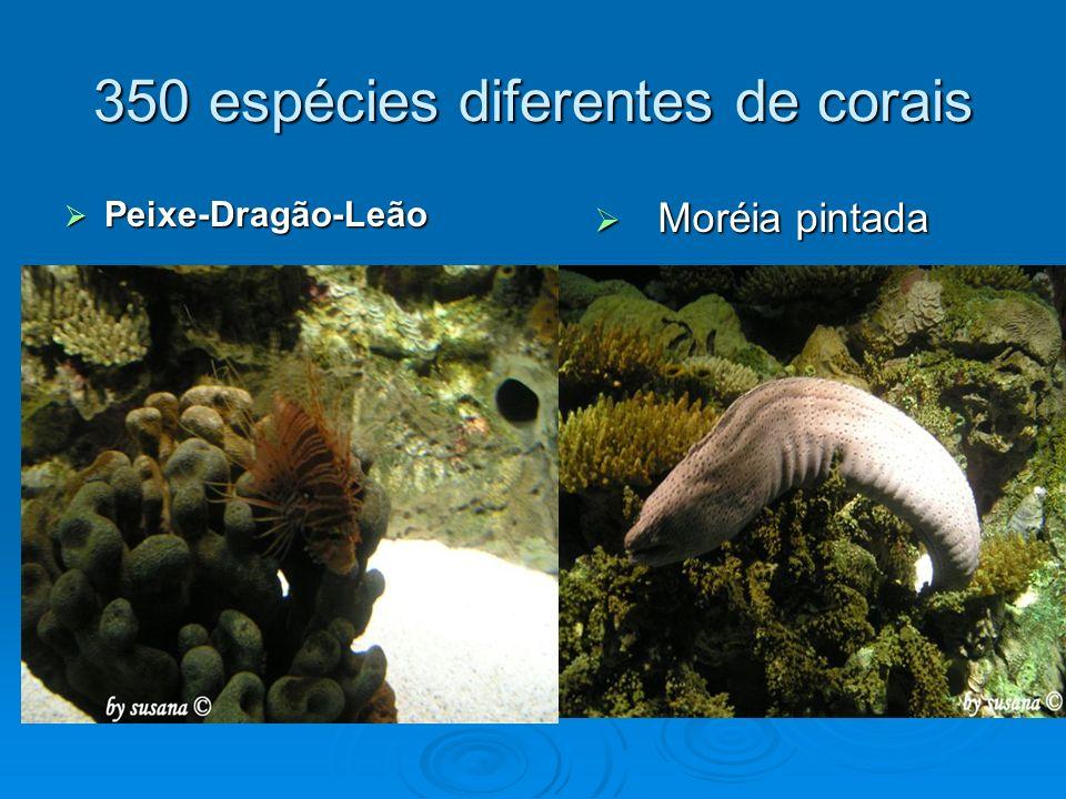 350 espécies diferentes de corais