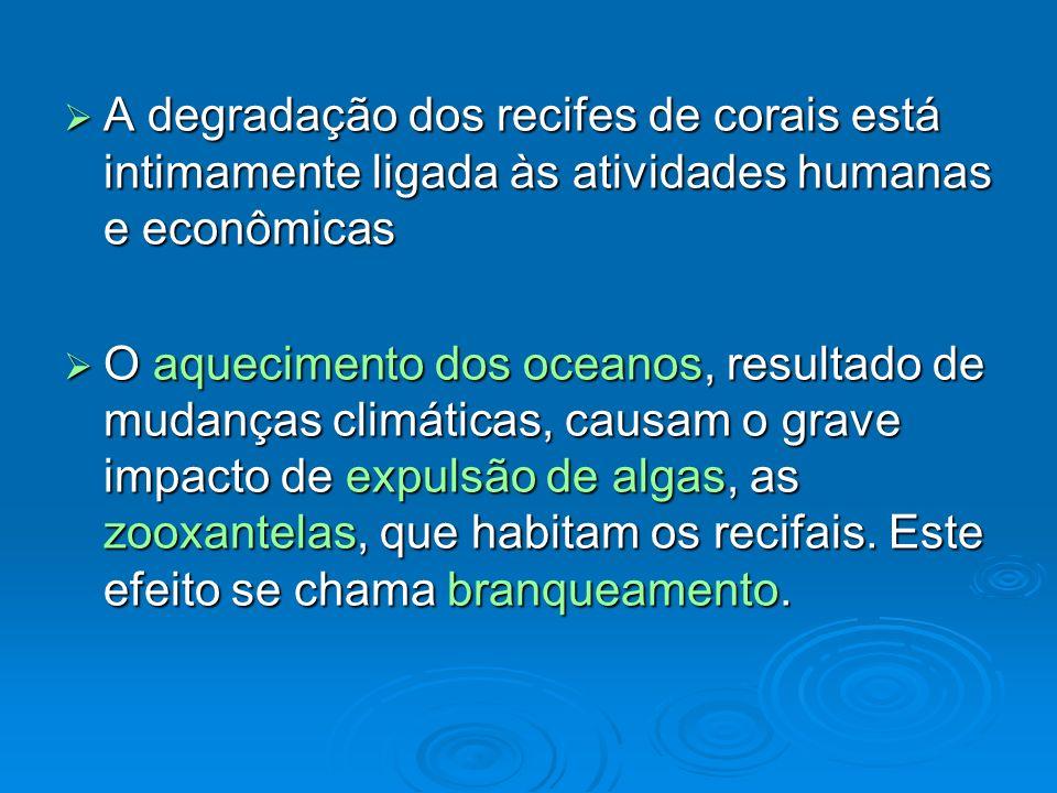 A degradação dos recifes de corais está intimamente ligada às atividades humanas e econômicas