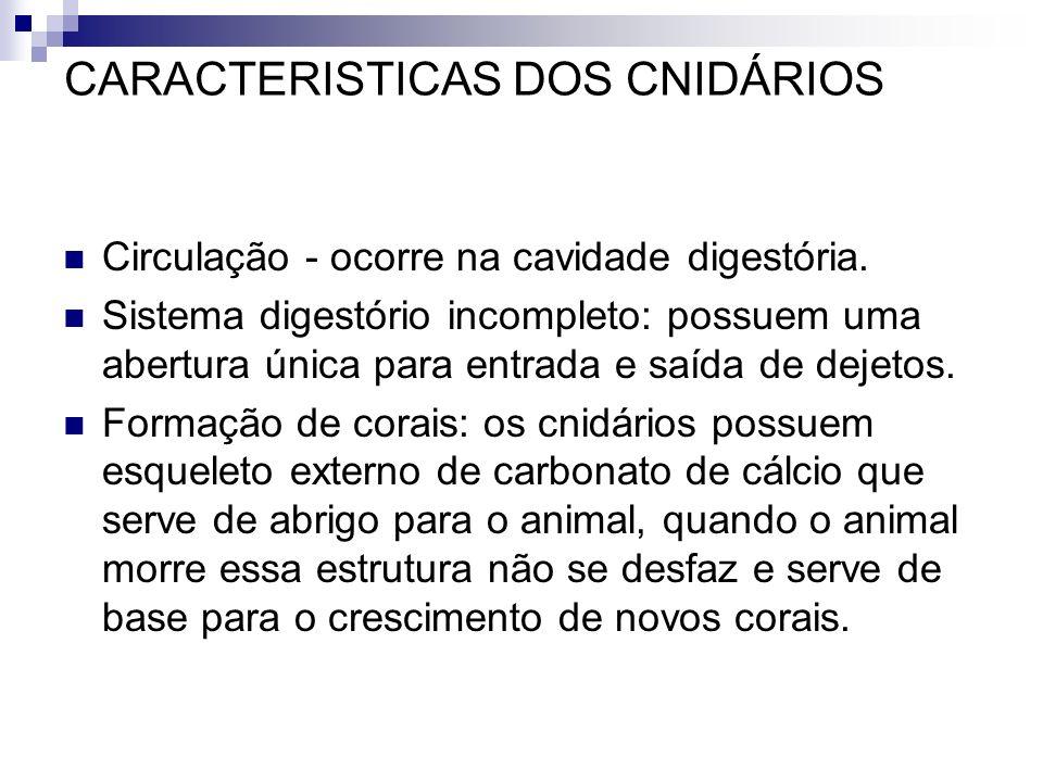 CARACTERISTICAS DOS CNIDÁRIOS