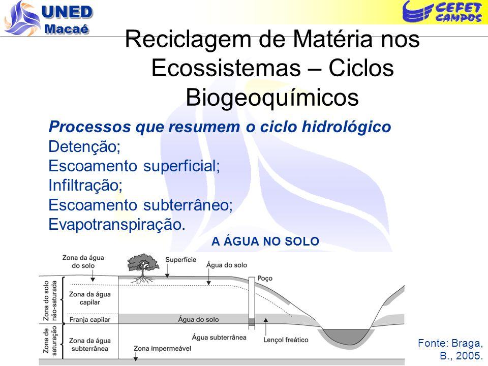 Reciclagem de Matéria nos Ecossistemas – Ciclos Biogeoquímicos