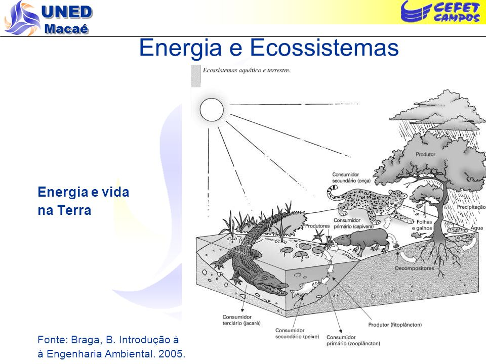 Energia e Ecossistemas