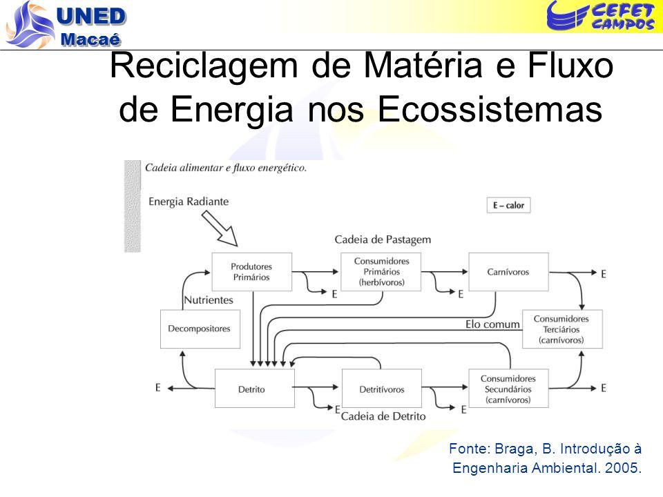Reciclagem de Matéria e Fluxo de Energia nos Ecossistemas