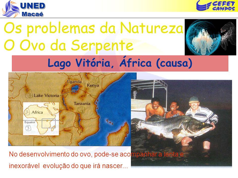 Lago Vitória, África (causa)