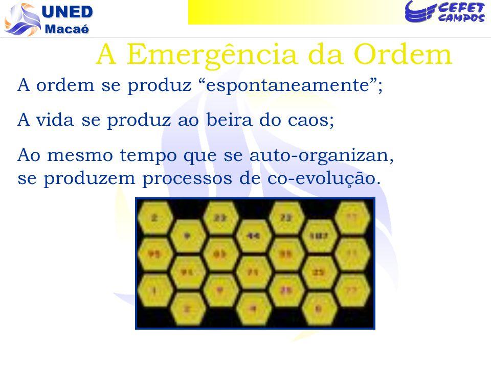 A Emergência da Ordem A ordem se produz espontaneamente ;