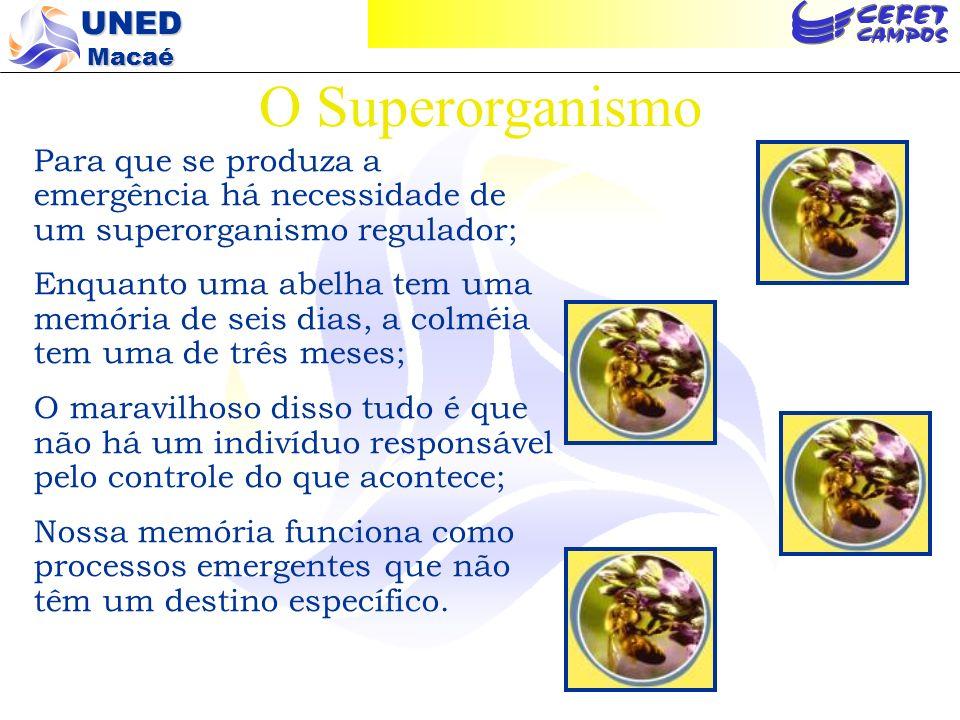 O Superorganismo Para que se produza a emergência há necessidade de um superorganismo regulador;