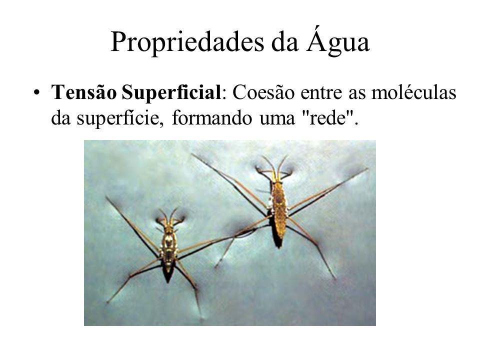 Propriedades da Água Tensão Superficial: Coesão entre as moléculas da superfície, formando uma rede .