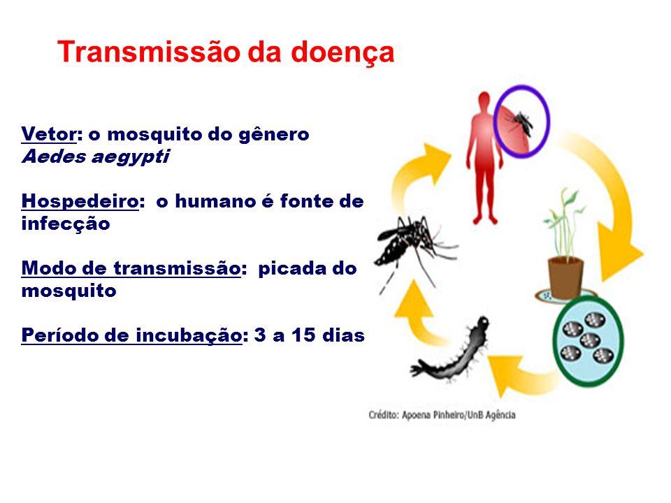 Transmissão da doença Vetor: o mosquito do gênero Aedes aegypti