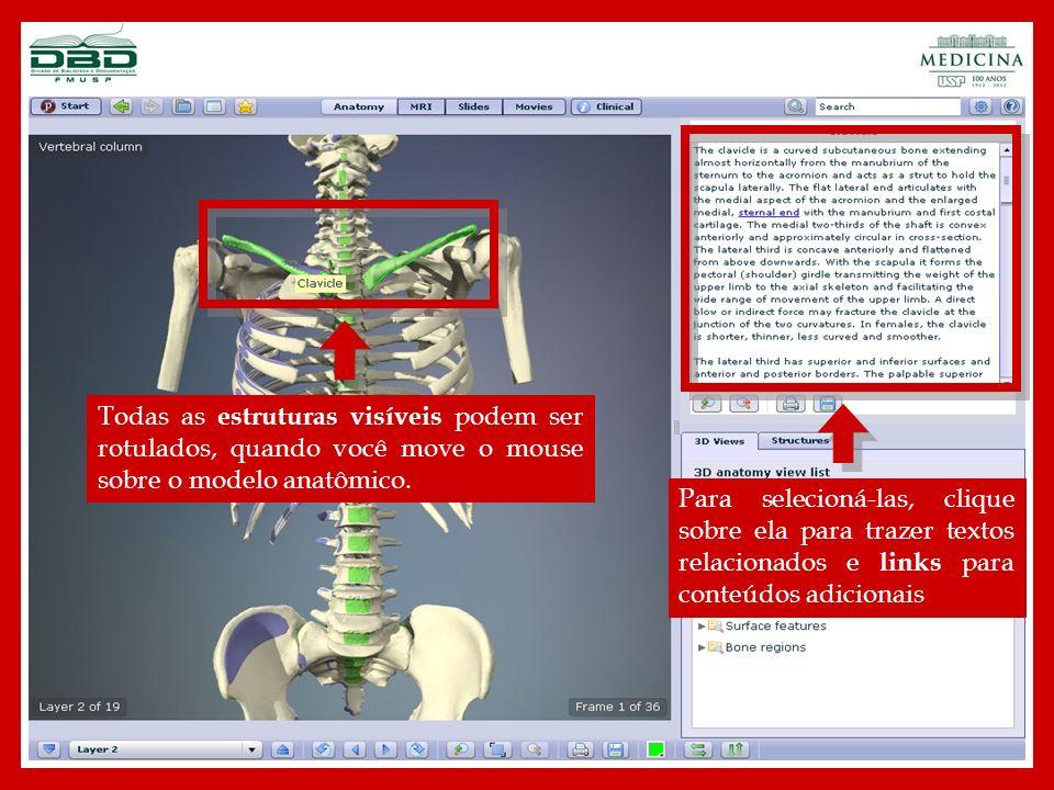 Todas as estruturas visíveis podem ser rotulados, quando você move o mouse sobre o modelo anatômico.