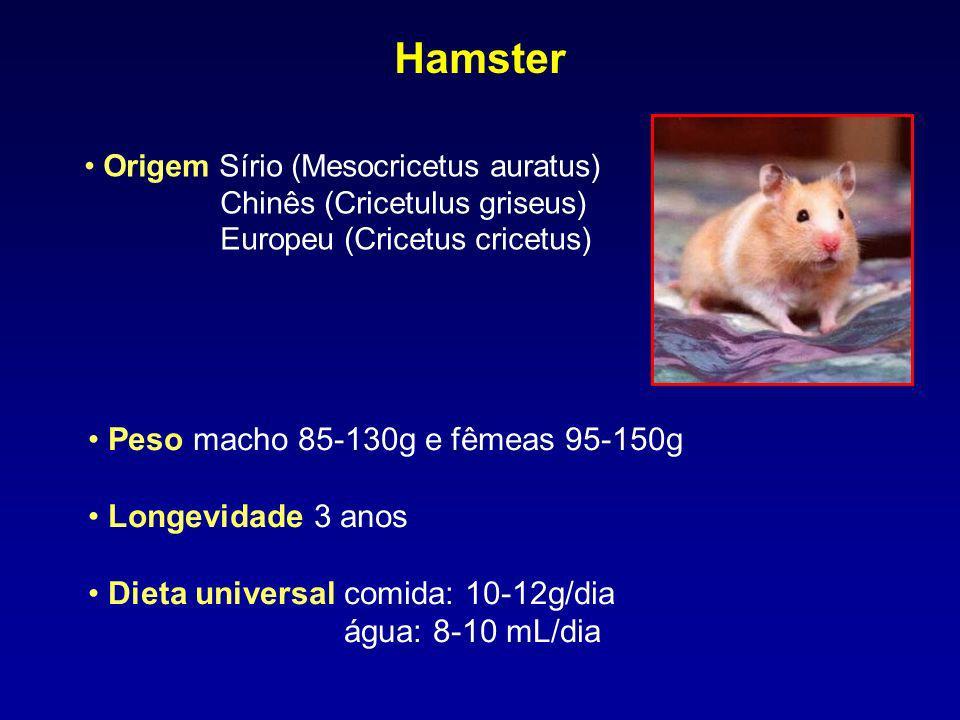Hamster Peso macho 85-130g e fêmeas 95-150g Longevidade 3 anos