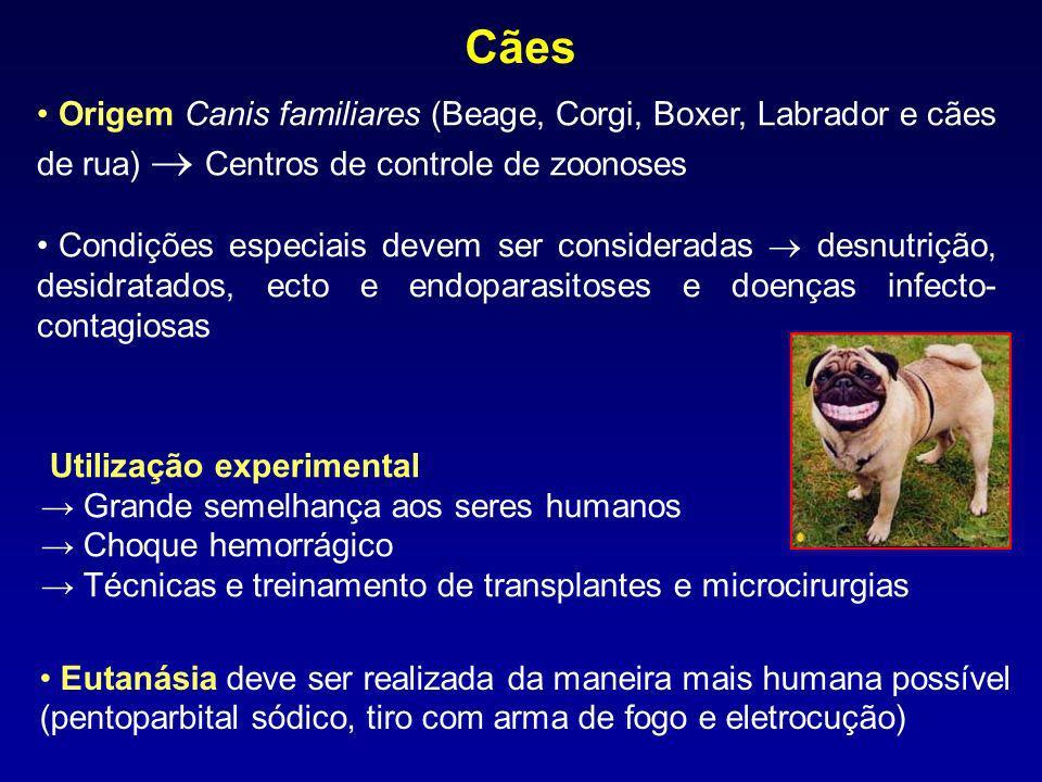 Cães Origem Canis familiares (Beage, Corgi, Boxer, Labrador e cães de rua)  Centros de controle de zoonoses.