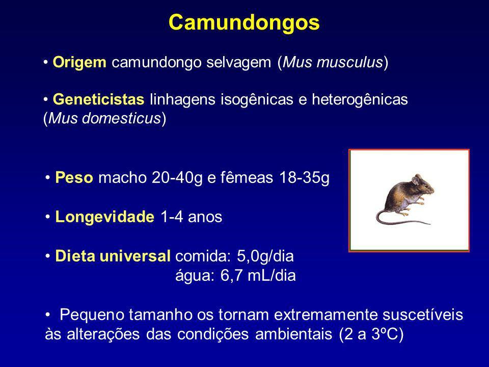 Camundongos Peso macho 20-40g e fêmeas 18-35g Longevidade 1-4 anos