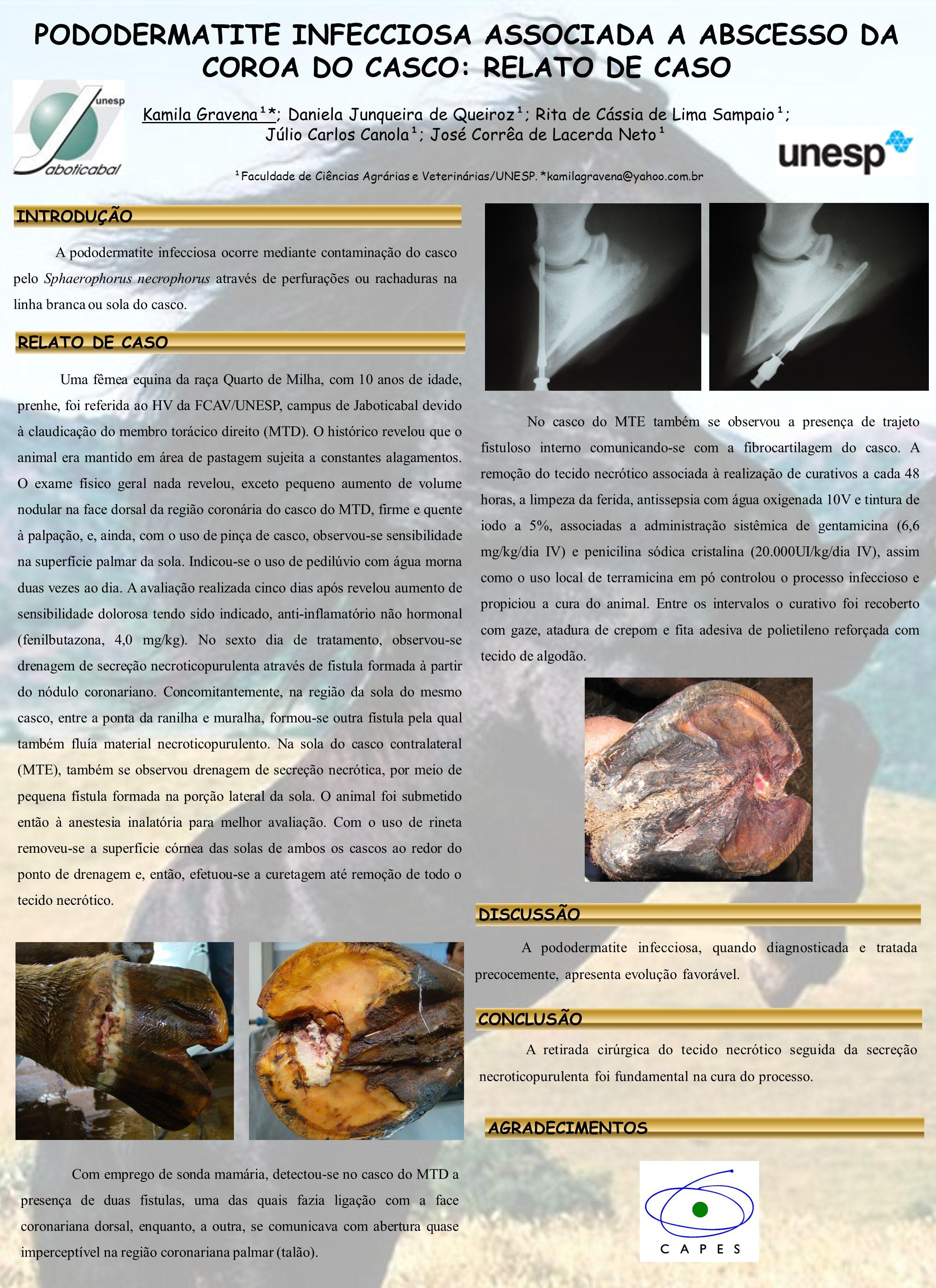 PODODERMATITE INFECCIOSA ASSOCIADA A ABSCESSO DA COROA DO CASCO: RELATO DE CASO