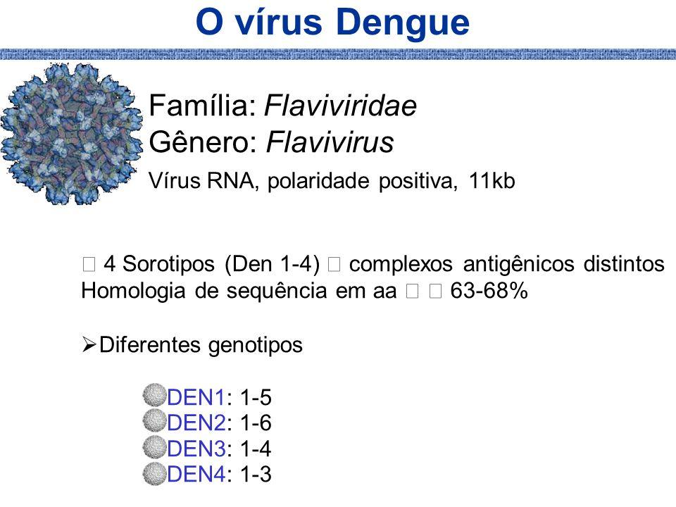 O vírus Dengue Família: Flaviviridae Gênero: Flavivirus