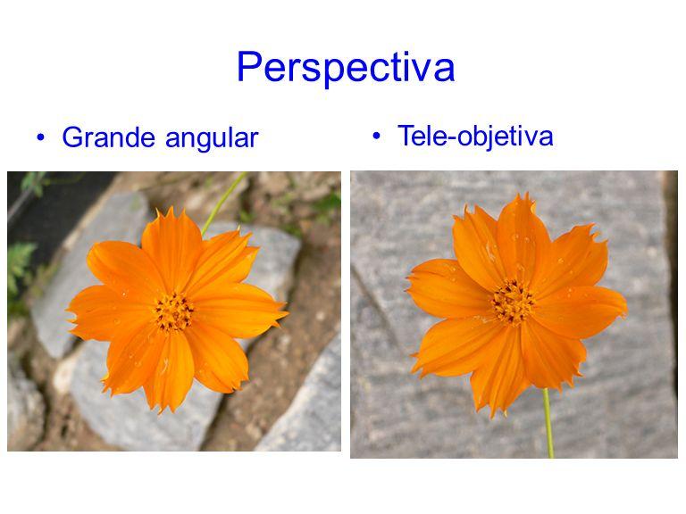 Perspectiva Grande angular Tele-objetiva