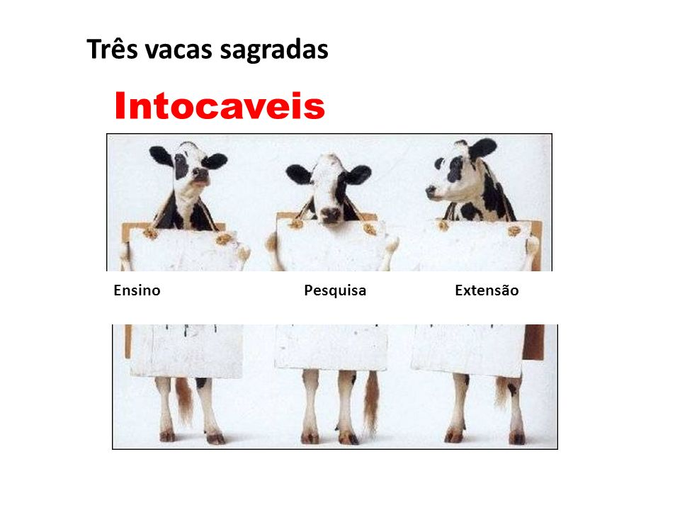 Três vacas sagradas Intocaveis.