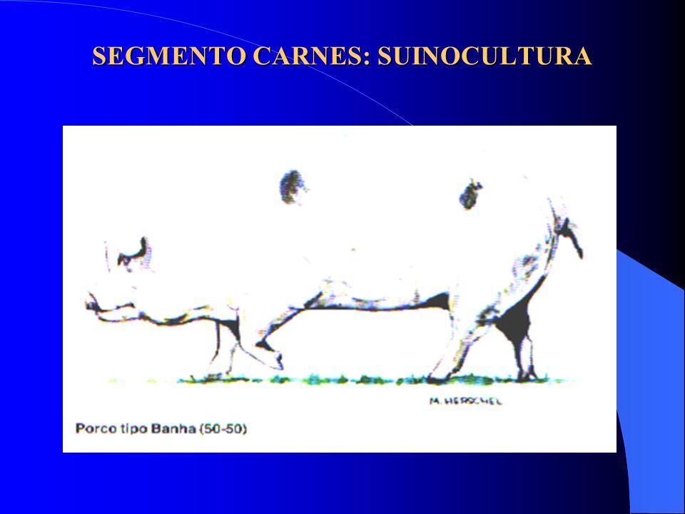 SEGMENTO CARNES: SUINOCULTURA